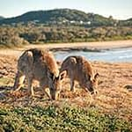 Emerald Beach Coffs-Clarence Coast Region NSW