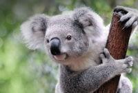 Port-Stephens-Koala-Sanctuary-5.jpg