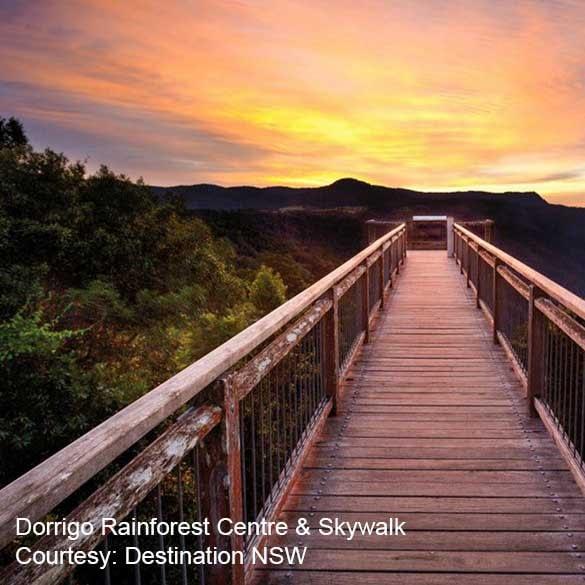 Coffs Coast Clarence Coast Dorrigo Rainforest Centre Skywalk