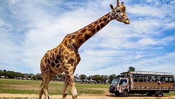 Dubbo - Love NSW Caravan & Camping