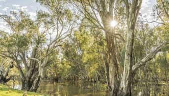 Darlington Point - Classic Australian Drive (Touring Route) - Love NSW Caravan & Camping