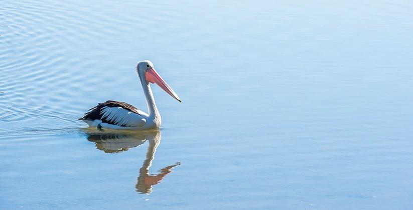 Palm Lake Resort Yamba 3